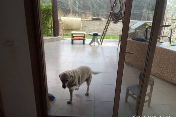 רשת חתולים וכלבים